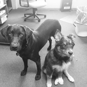 Avery & Cheyenne