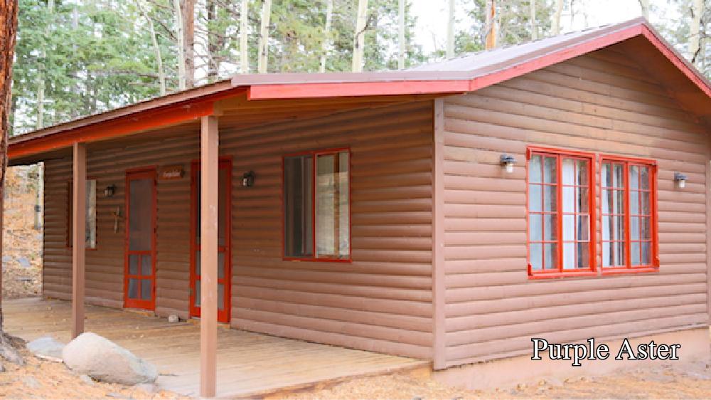 Cabin- Purple Aster